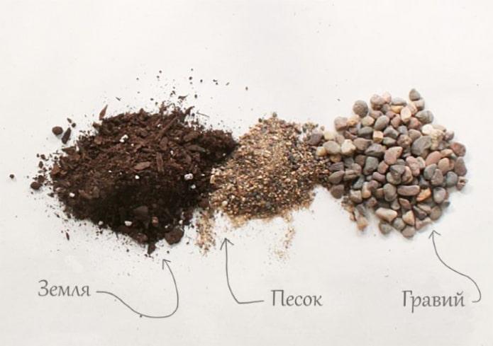 composition du sol pour plantes succulentes