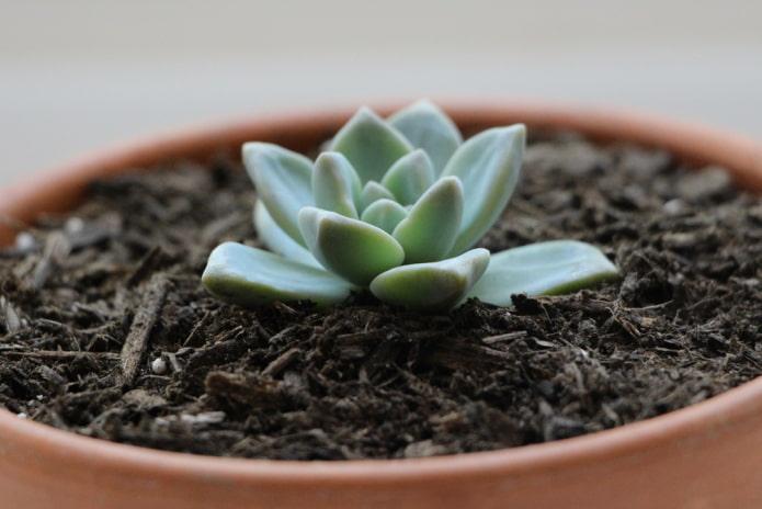 comment propager des plantes succulentes