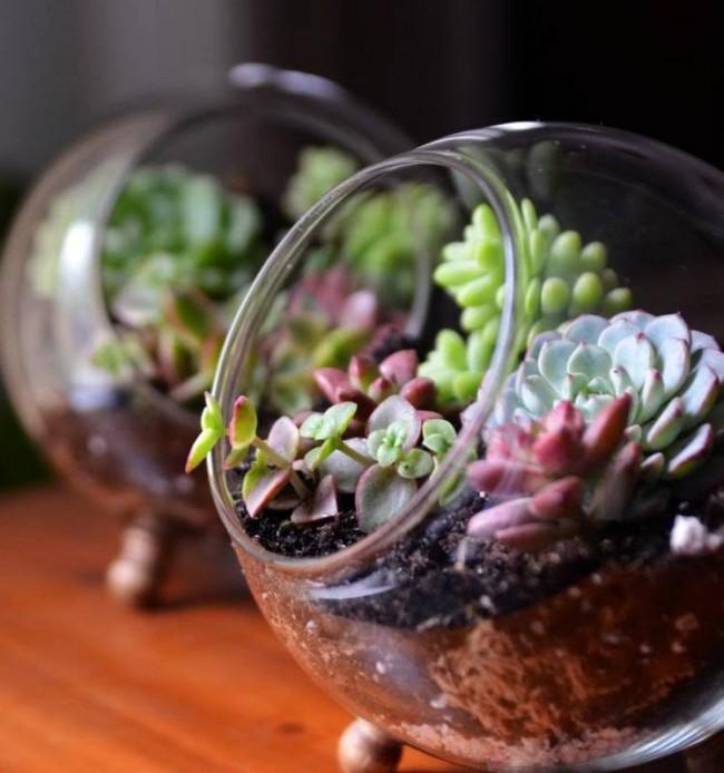 Succulentes.  Les plantes succulentes sont souvent conservées dans des florariums, leur fond transparent vous permet de montrer ouvertement des couches de terre et de sable