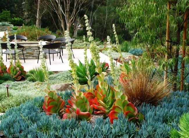 Succulentes.  Plus la différence de couleur des feuilles des différentes plantes succulentes plantées à proximité est grande, plus la composition du paysage est inhabituelle