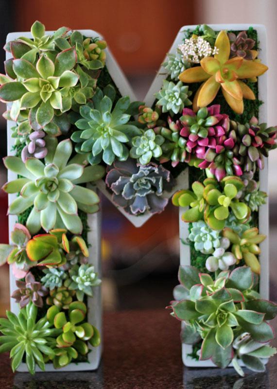 Succulentes.  Les possibilités de décoration intérieure et extérieure avec des plantes succulentes sont infinies