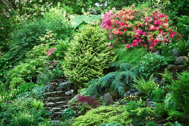 Un toboggan alpin densément planté de plantes plaît à l'œil avec ses couleurs vives et juteuses