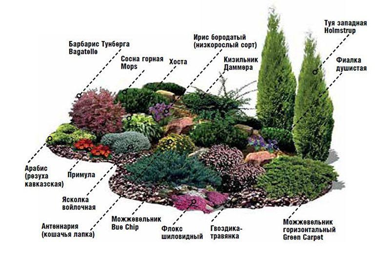 Slide Alpine DIY - Comment choisir les plantes