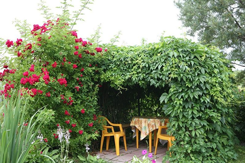 Gazebos de plantes - photo