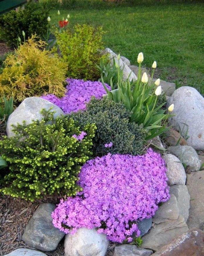 fleurs pour le toboggan alpin