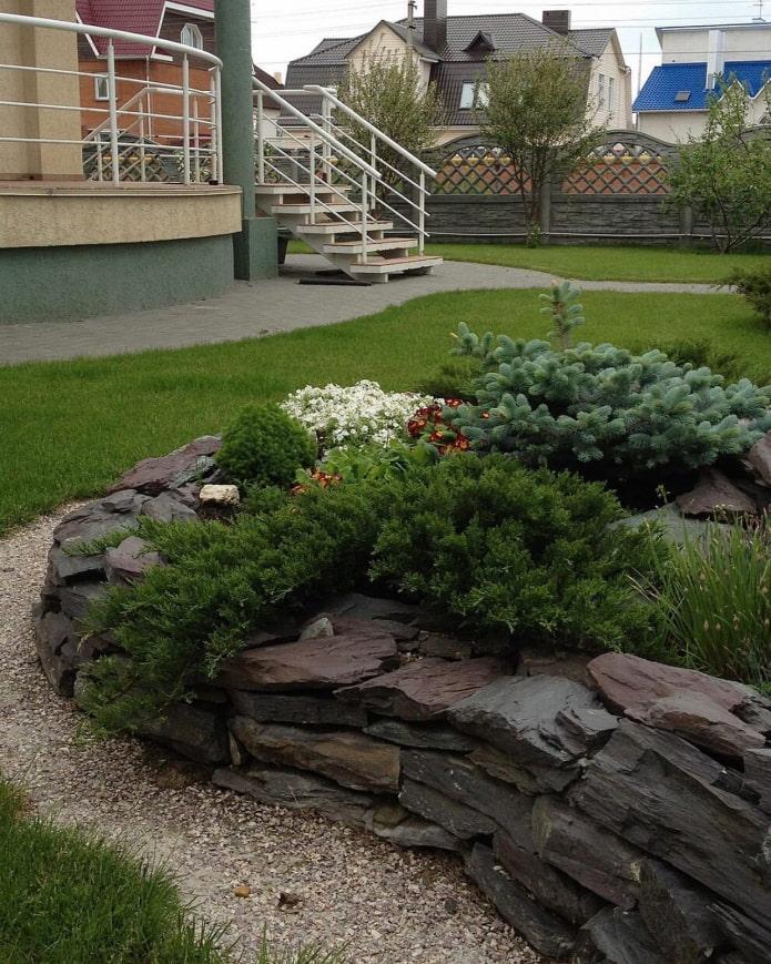 conifères dans un jardin de rocaille