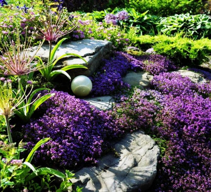 plantes rampantes pour jardin de rocaille