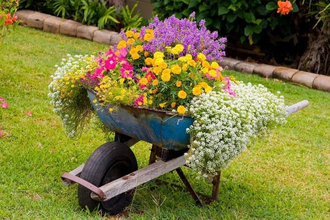 Beau parterre de fleurs annuelles