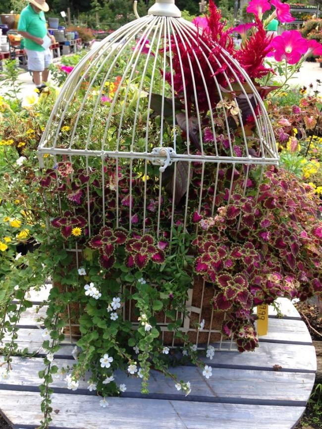 Cage en fleurs