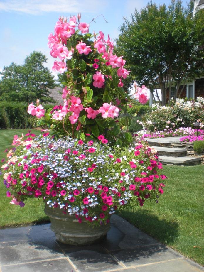 Parterre de fleurs en forme de fontaine