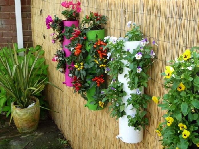 Parterres de fleurs sur la clôture