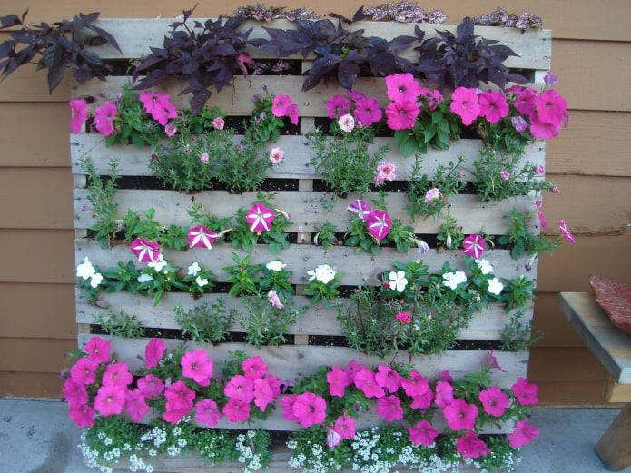 parterre de fleurs vertical en bois pour pétunias