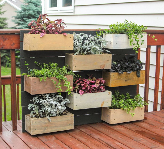 Plantes ornementales en boîtes