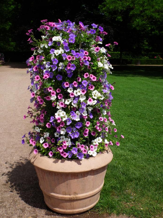 Jardin fleuri vertical