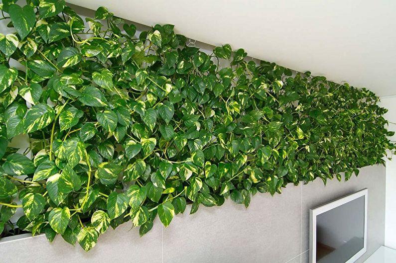 Scindapsus - Plantes d'intérieur grimpantes, décoratives à petites feuilles