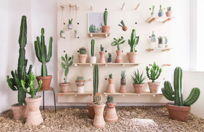 Collection de cactus à l'intérieur