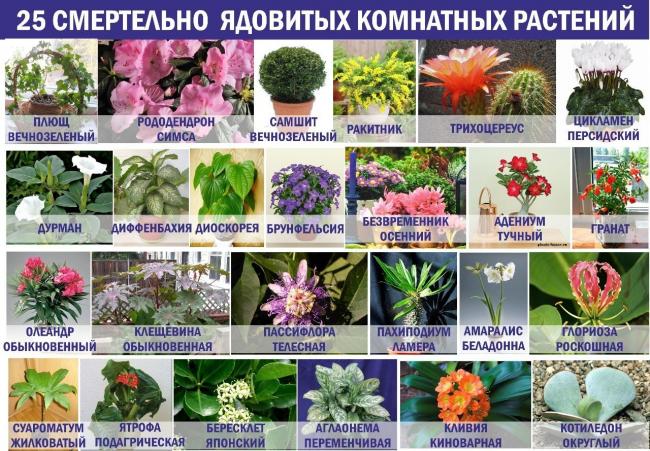 Les fleurs les plus dangereuses