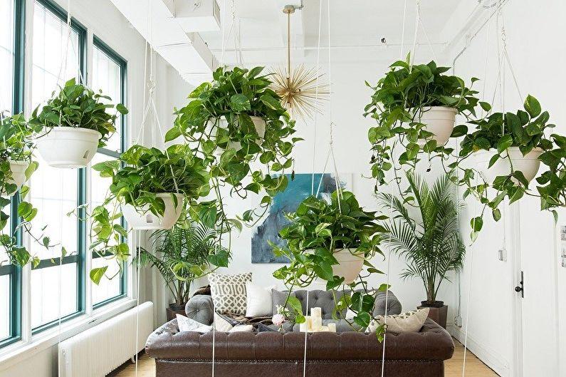 Plantes d'intérieur grimpantes (75+ photos)