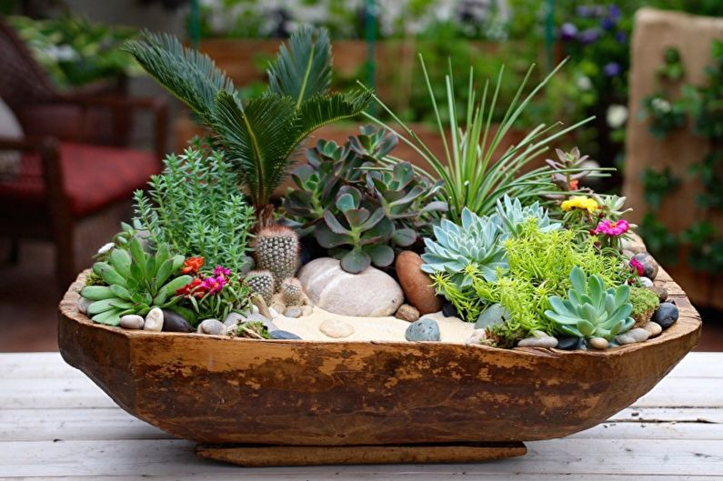 Succulentes (90 photos): types, règles de soins