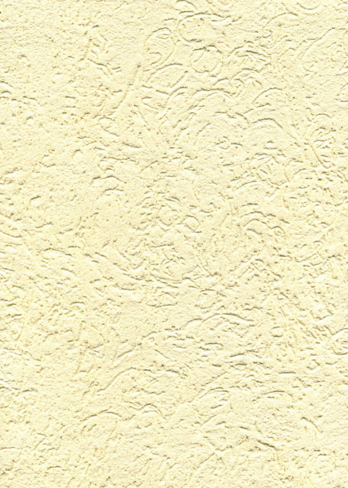 scolyte du plâtre