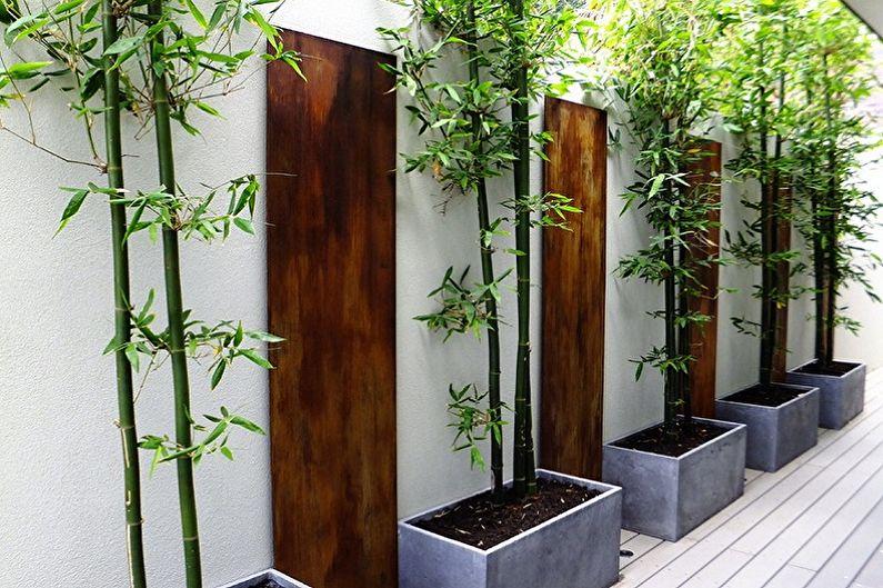 Bambou d'intérieur - Principaux types