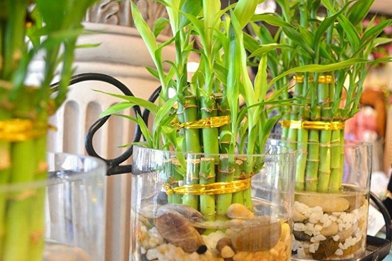 Soin du bambou d'intérieur - Arrosage