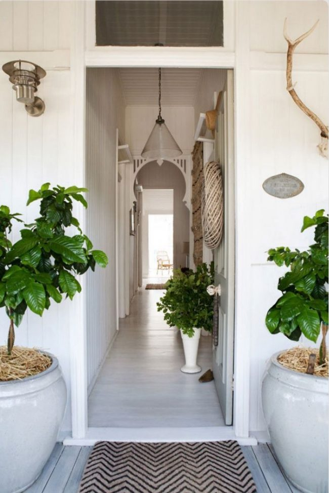 Plantes vivantes dans des pots de fleurs massifs à l'entrée d'une maison privée et dans le couloir