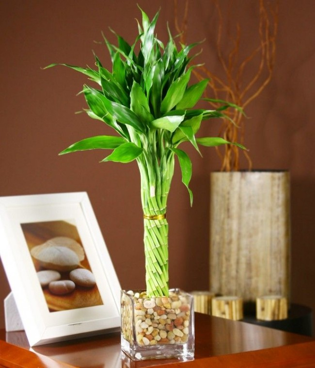 Le bambou servira d'élément de décor merveilleux