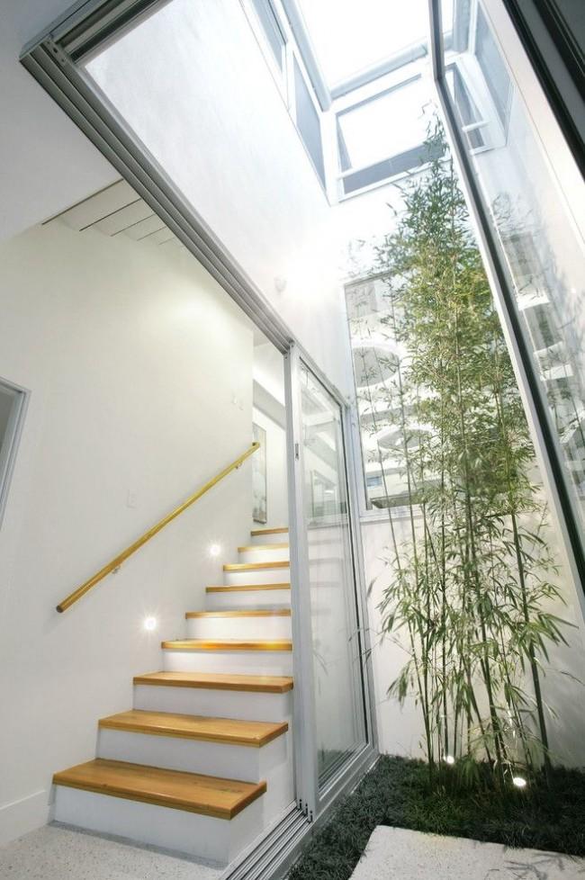 Si la hauteur des plafonds de la pièce le permet, vous pouvez planter un bambou en forme d'arbre