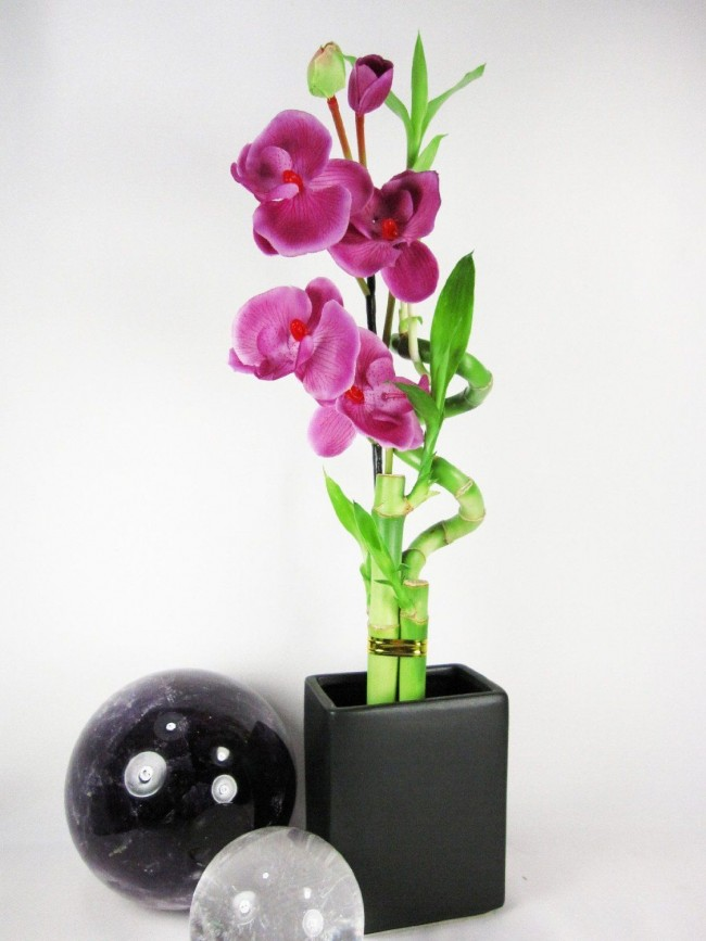 Grande combinaison d'orchidée et de bambou d'intérieur