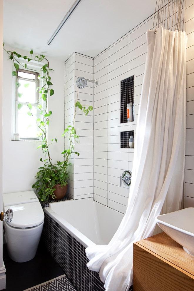 Philodendron dans la salle de bain