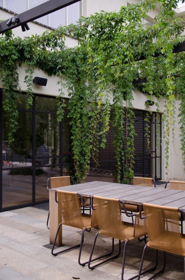 Vignes suspendues d'une plante vivace sur la terrasse