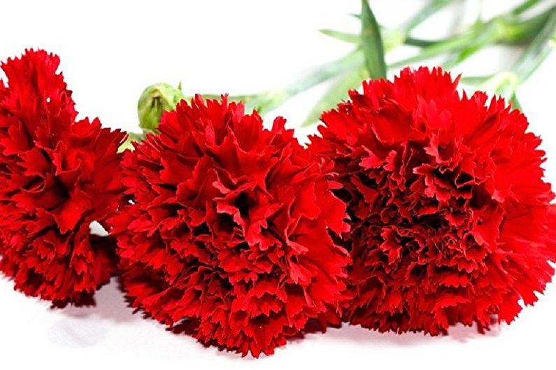 Fleurs de serviette DIY - Oeillets