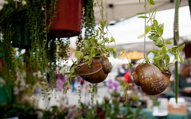 Les coquilles peuvent être utilisées comme jardinières pour les petites plantes.