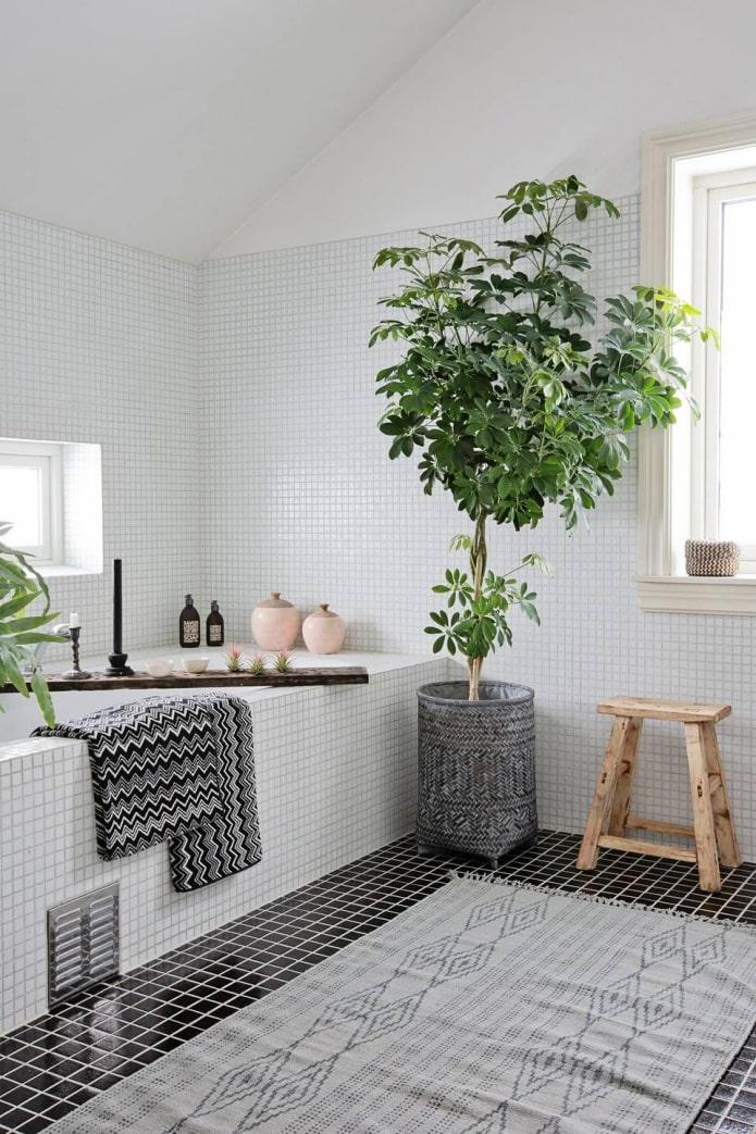 Des plantes dans la salle de bain