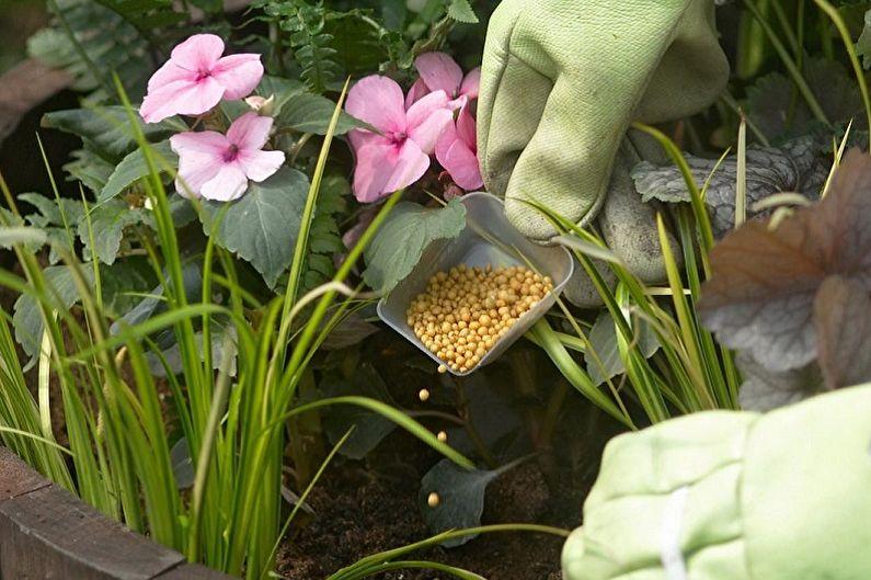 Fleurs vivaces pour une résidence d'été et un jardin - Soins
