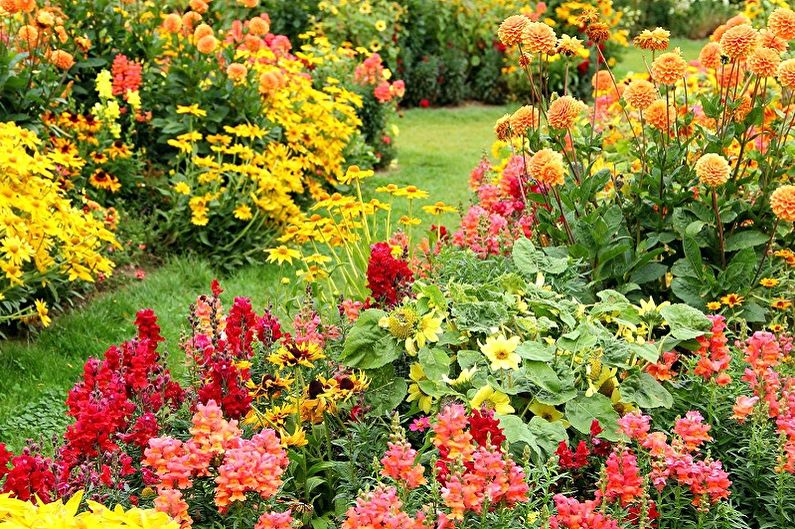 Fleurs vivaces pour le jardin et le jardin - les avantages de la plantation