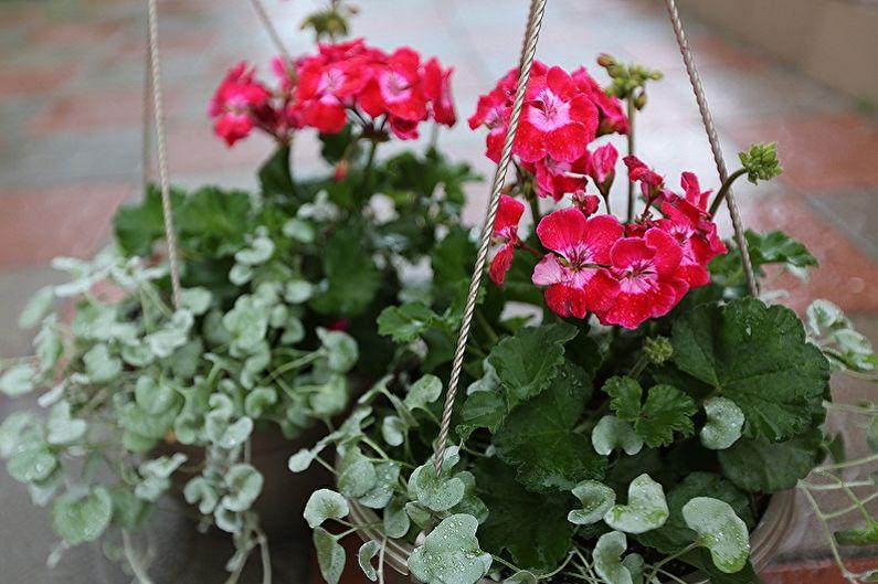 Jardinage vertical en aménagement paysager - Quelles plantes choisir