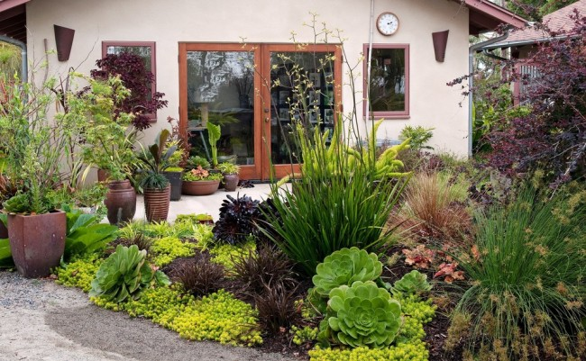 Conception de la zone autour de la maison de campagne en utilisant une combinaison de diverses plantes