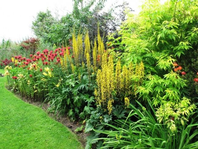 Les principaux composants du mixborder anglais sont une combinaison de plantes sauvages et de jardin.
