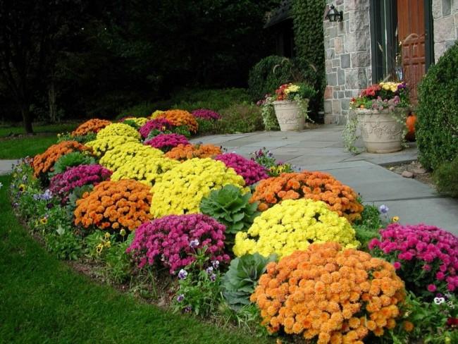 Le mixborder est très coloré, il a donc besoin d'un fond solide - un mur d'une maison, un buisson ou une clôture d'un terrain.