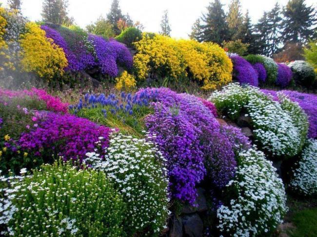 Parterre de fleurs vivaces