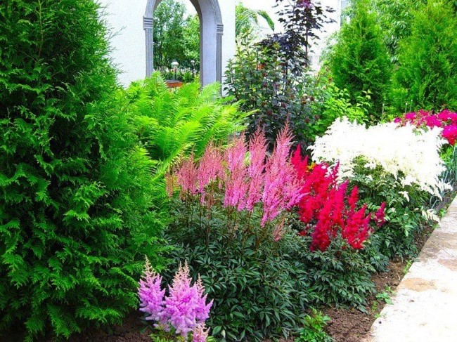 Un arrière-plan intéressant pour les mixborders sont les vignes, les arbustes et arbres à feuilles persistantes ou à fleurs, les arbres à feuilles caduques avec une couronne ajourée.