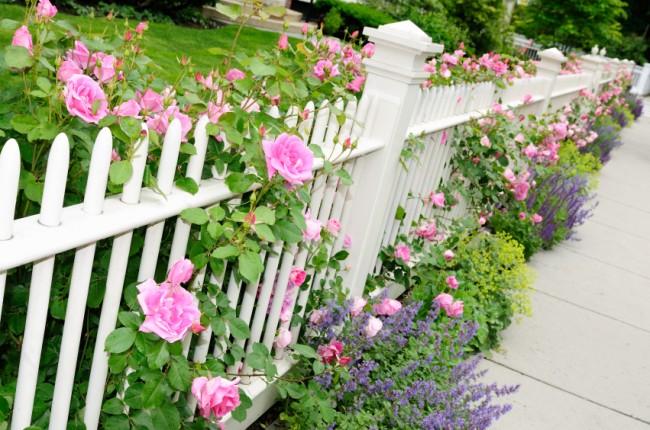 Clôture pour les parterres de fleurs de vos propres mains.  La hauteur de la clôture décorative est choisie en fonction de la hauteur des fleurs cultivées dans un parterre de fleurs ou une pelouse