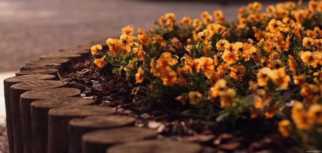 Clôture pour les parterres de fleurs de vos propres mains.  Une clôture faite de cales en bois sera solide et stable si elle est creusée à une profondeur d'environ 20 cm. Pour la protéger de la pourriture, le bois sous le sol doit être enveloppé dans du ruban de feutre de toiture.