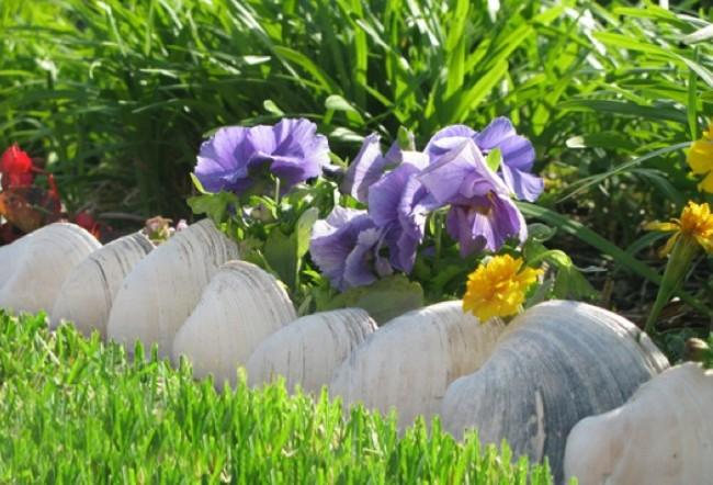 Clôture pour les parterres de fleurs de vos propres mains.  Iris, entourés d'une rangée de gros coquillages
