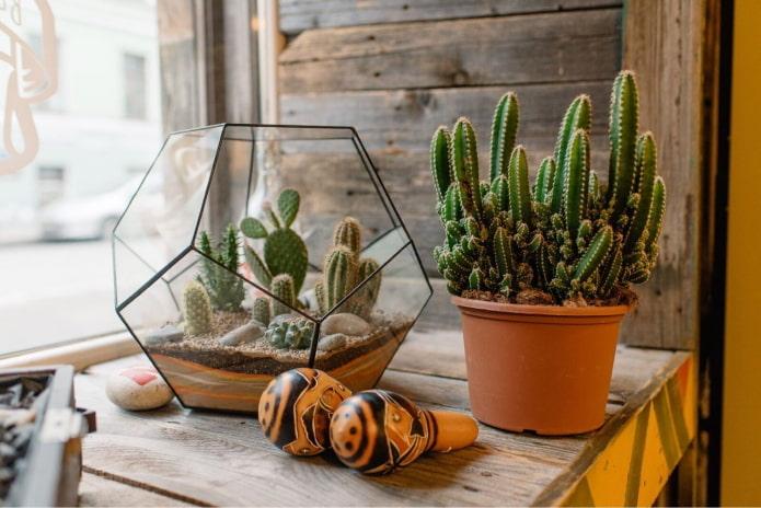 Cactus à l'intérieur
