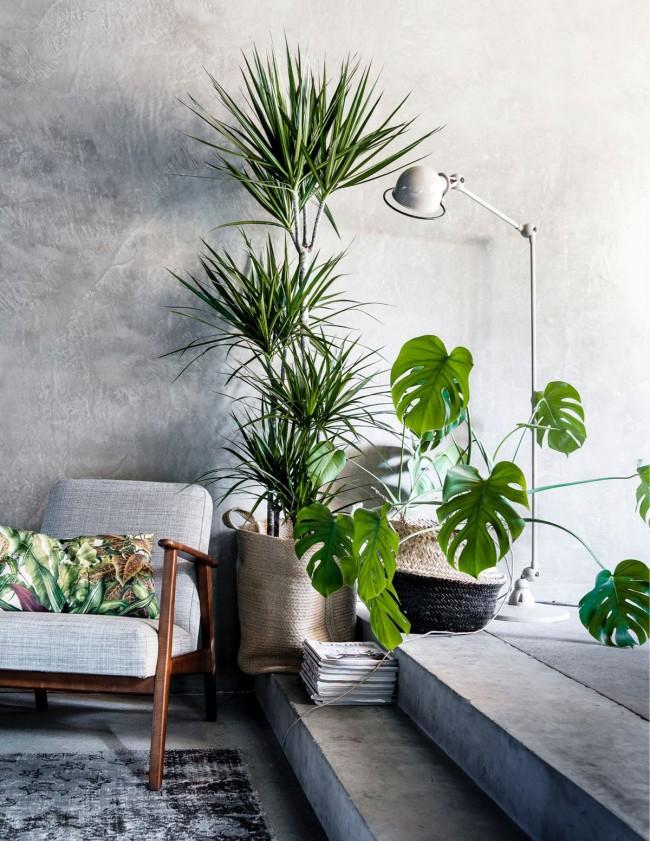 Certaines plantes d'intérieur, malgré leur beauté, ne sont pas du tout inoffensives.  Lire la suite ci-dessous.