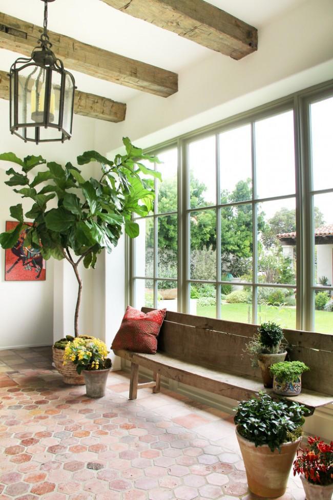 Un des types de ficus.  Si vous souhaitez oxygéner la pièce jour et nuit, il est préférable de choisir une autre plante pour cela.