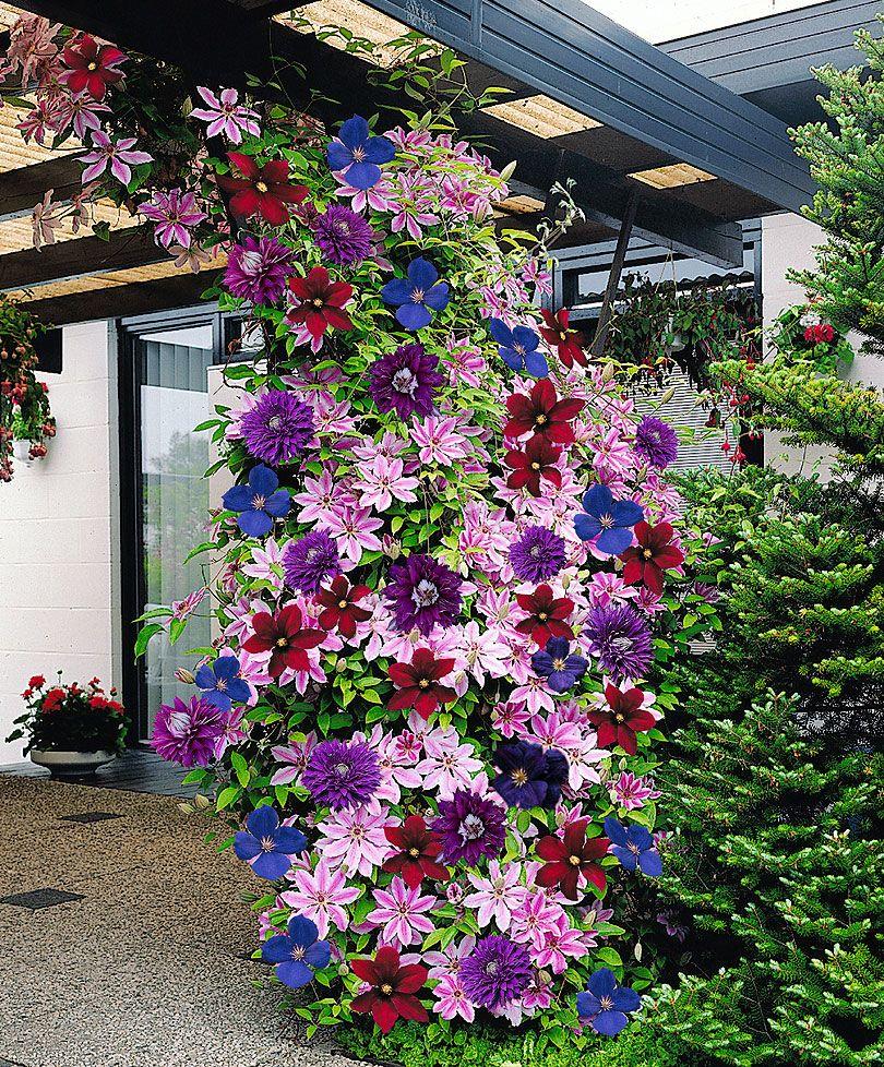 Clematis - une décoration chic d'une maison de campagne